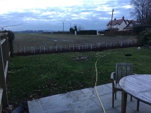 hedge planting
